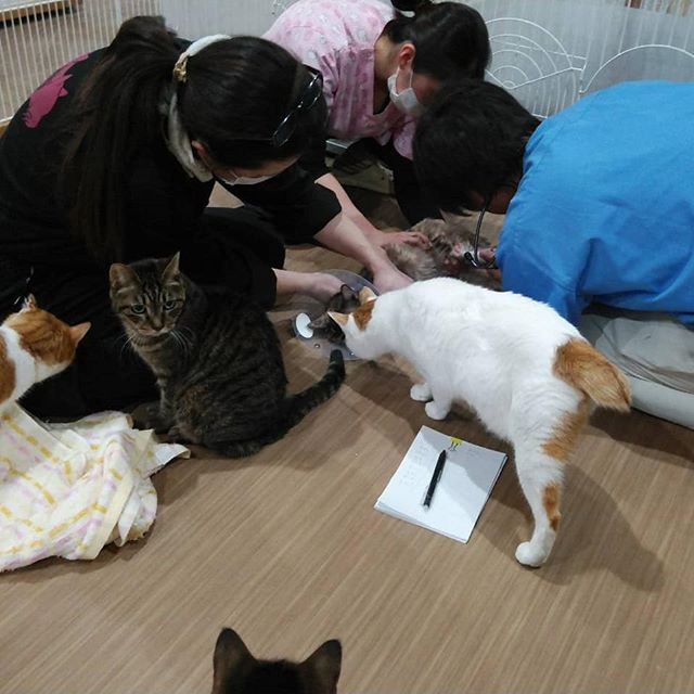 ・・・今夜は8にゃんこ達のために診察時間が終わったあとに往診にきていただきました その前に、お願いしてあった他の9にゃんこの薬も作ってきてくださったりと先生そして病院スタッフさん本当にいつもいつもありがとうございます みんなで元気に冬を乗り越えられますように!#猫 #ねこ #ネコ #cats #猫部 #ネコ部 #ねこ部 #にゃんすたぐらむ #保護猫 #保護猫施設 #猫シェルター #アニマルサードアイズ #animal3rdeyes #高齢猫 #安らぎある #終の棲み処 を #目指して #いつもありがとう