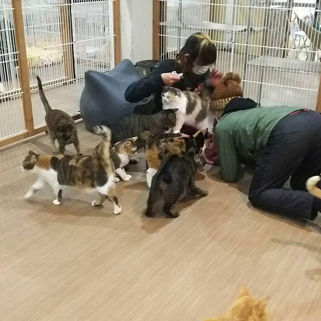 ・・・( *¯ ꒳¯*)ウフフ~♪なおやつタイムお手伝いしてくださったみなさま、 ありがとうございました!ヾ(●´∇`●)ノ#猫 #ねこ #ネコ #cats #猫部 #ネコ部 #ねこ部 #にゃんすたぐらむ #保護猫 #保護猫施設 #猫シェルター #アニマルサードアイズ #animal3rdeyes #高齢猫 #安らぎある #終の棲み処 を #目指して #いつもありがとう