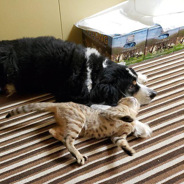 ・・・ホント仲いいね~ 見ているだけで心洗われる。やっぱり動物ってすごい。一緒にいられる毎日に感謝感謝です#猫 #ねこ #ネコ #cats #猫部 #ネコ部 #ねこ部 #にゃんすたぐらむ #保護猫 #保護猫施設 #猫シェルター #アニマルサードアイズ #animal3rdeyes #高齢猫 #安らぎある #終の棲み処 を #目指して #いつもありがとう  #巨大食道症 #ひのき と #犬 #アニ子