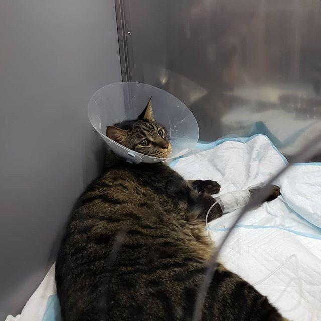 ・・・ 『ルナ』『田中チャン』『ゆーみん』診察のため病院へ 今朝緊急入院をした『わさび』にも会ってきました。みんな頑張ってます。こんなに頑張っているんだもん。神様、どうかこの子達にご褒美をください#猫 #ねこ #ネコ #cats #猫部 #ネコ部 #ねこ部 #にゃんすたぐらむ #保護猫 #保護猫施設 #猫シェルター #アニマルサードアイズ #animal3rdeyes #高齢猫 #安らぎある #終の棲み処 を #目指して #いつもありがとう
