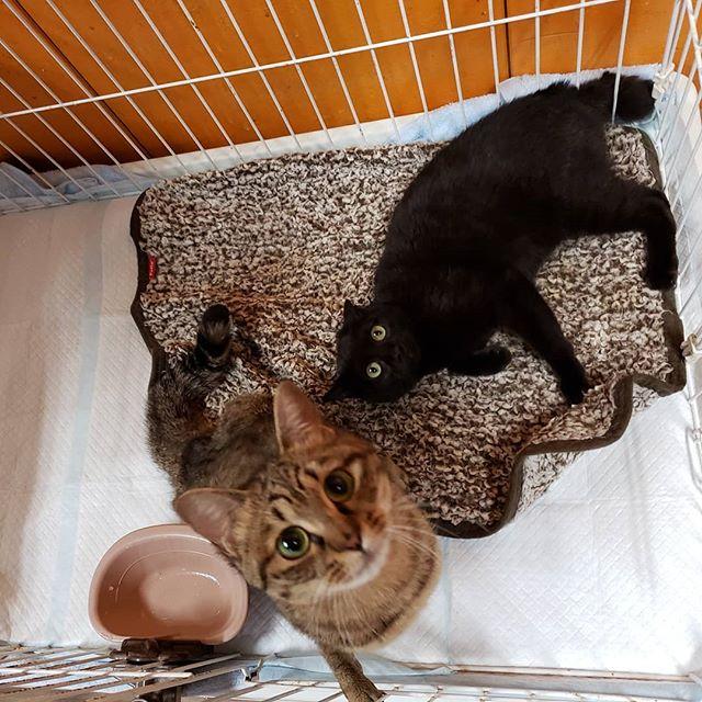 ・・・いいお天気ですね~ 下半身麻痺の『藤丸』♀と右後肢を断脚した『こくたん』♀ お部屋のお掃除中に戯れるの巻。#猫 #ねこ #ネコ #cats #猫部 #ネコ部 #ねこ部 #にゃんすたぐらむ #保護猫 #保護猫施設 #猫シェルター #アニマルサードアイズ #animal3rdeyes #高齢猫 #安らぎある #終の棲み処 を #目指して #いつもありがとう