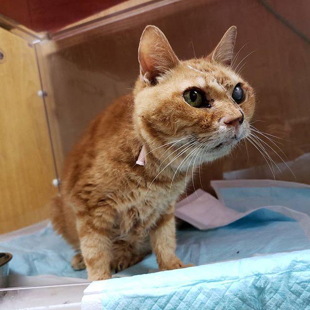 ・・・ 『タマニ』おじいちゃん身体を起こすことが増えてきたよ! 『ひのき』嬢もなんだか嬉しそうです( *´艸`) #猫 #ねこ #ネコ #cats #高齢猫 #保護猫 #保護猫施設 #猫シェルター #animal3rdeyes #アニマルサードアイズ #安らぎある #終の棲み処 を #目指して #いつもありがとう