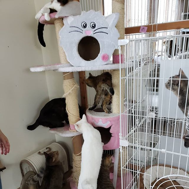 ・・・もうね、限界すぎて倒壊しそうなキャットタワーなのですがみんなが代わる代わる愛用しているものだからなかなか撤去するタイミングがなくてでも突然倒壊してしまったら危ないから と壁際へ動かしたんです。その時の様子。。。こりゃまだまだ撤去できなさそう 大人気キャットタワーです( *´艸`) #猫 #ねこ #ネコ #cats #高齢猫 #保護猫 #保護猫施設 #猫シェルター #animal3rdeyes #アニマルサードアイズ #安らぎある #終の棲み処 を #目指して #いつもありがとう