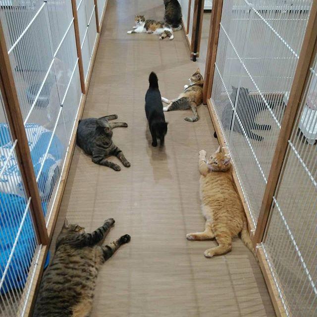 ・・・連日バテバテな猫さん達のもとへ断熱材到着すごい量....... 早く快適なお部屋になるといいね~( ~´・_・`)~ 今日も暑いな。。。 #猫 #ねこ #ネコ #cats #高齢猫 #保護猫 #保護猫施設 #猫シェルター #animal3rdeyes #アニマルサードアイズ #安らぎある #終の棲み処 を #目指して #いつもありがとう