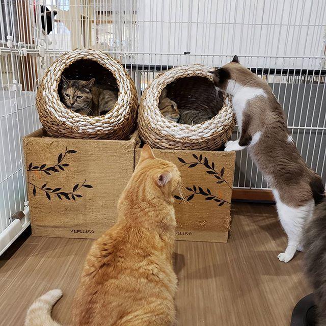 ・・・順番待ちをするも、待ちきれずに交渉中。#猫 #ねこ #ネコ #cats #高齢猫 #保護猫 #保護猫施設 #猫シェルター #animal3rdeyes #アニマルサードアイズ #安らぎある #終の棲み処 を #目指して #いつもありがとう