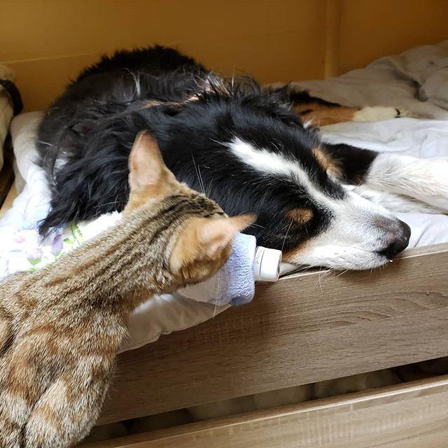 ・・・体調不良の『アニ子』を心配する『ひのき』今日は病院が休診日 うむむむ。#猫 #ねこ #ネコ #cats #高齢猫 #保護猫 #保護猫施設 #猫シェルター #animal3rdeyes #アニマルサードアイズ #安らぎある #終の棲み処 を #目指して #いつもありがとう