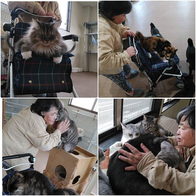 """・・・大好きなお母さん(飼い主さん)が会いに来てくれて、ご機嫌ちゃんな""""おじいちゃんズ"""" と、手押し車を堪能して一緒にシェルター内を見学にまわる『ちび』&『こもも』ほっこり日曜日。#猫 #ねこ #ネコ #cats #高齢猫 #保護猫 #保護猫施設 #猫シェルター #animal3rdeyes #アニマルサードアイズ #安らぎある #終の棲み処 を #目指して #いつもありがとう"""