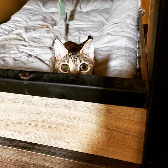 ・・・発射5秒前。常に狙われている感、満載🤣お転婆『ひのき』姫。みなさんのおかげで本日も異常なし(*`・ω・)ゞビシッ!! #猫 #ねこ #ネコ #cats #高齢猫 #保護猫 #保護猫施設 #猫シェルター #animal3rdeyes #アニマルサードアイズ #安らぎある #終の棲み処 を #目指して #いつもありがとう #巨大食道症 #ひのき