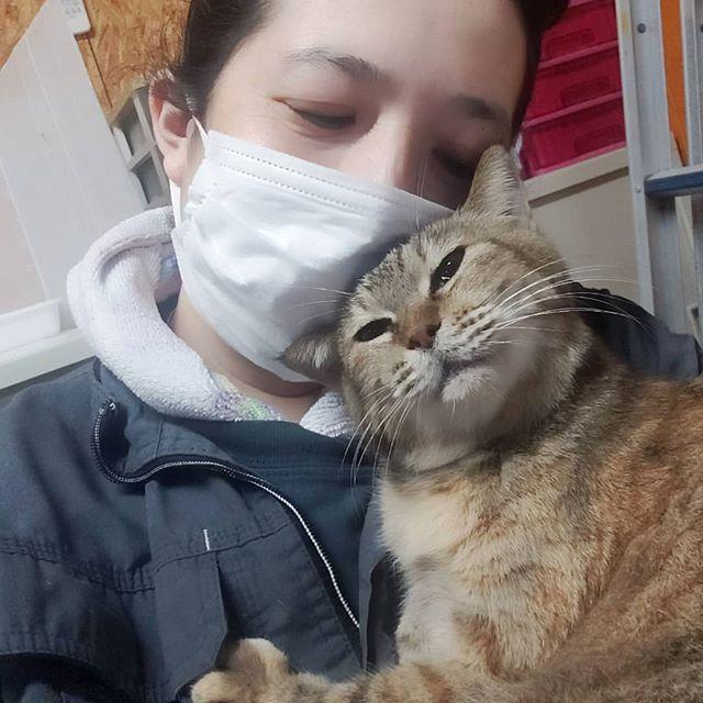 ・・・事務仕事が全くはかどらない。。 困った。。 しあわせ(笑)#猫 #ねこ #ネコ #cats #高齢猫 #保護猫 #保護猫施設 #猫シェルター #animal3rdeyes #アニマルサードアイズ #安らぎある #終の棲み処 を #目指して #いつもありがとう