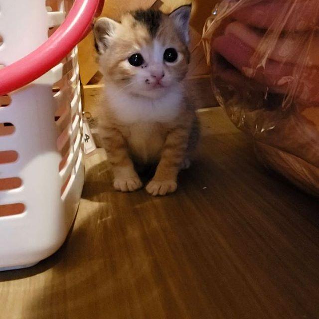 ・・・隙間警備隊『ユノ』ちゃん今日もお勤めごくろうさまです(´-ω-`)))コックリコックリ#猫 #ねこ #ネコ #cats #高齢猫 #保護猫 #保護猫施設 #猫シェルター #animal3rdeyes #アニマルサードアイズ #安らぎある #終の棲み処 を #目指して #いつもありがとう