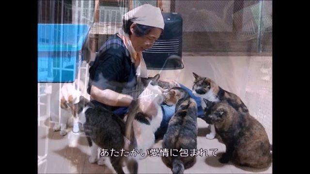 あしなが会員さん募集中アニマルサードアイズで暮らす猫達の毎日は、【あしなが会員】さんのお力添えによって支えていただいています。毎月1000円が猫達の笑顔に繋がります!! #猫 #ねこ #ネコ #cats #高齢猫 #保護猫 #保護猫施設 #猫シェルター #animal3rdeyes #アニマルサードアイズ #安らぎある #終の棲み処 を #目指して #いつもありがとう
