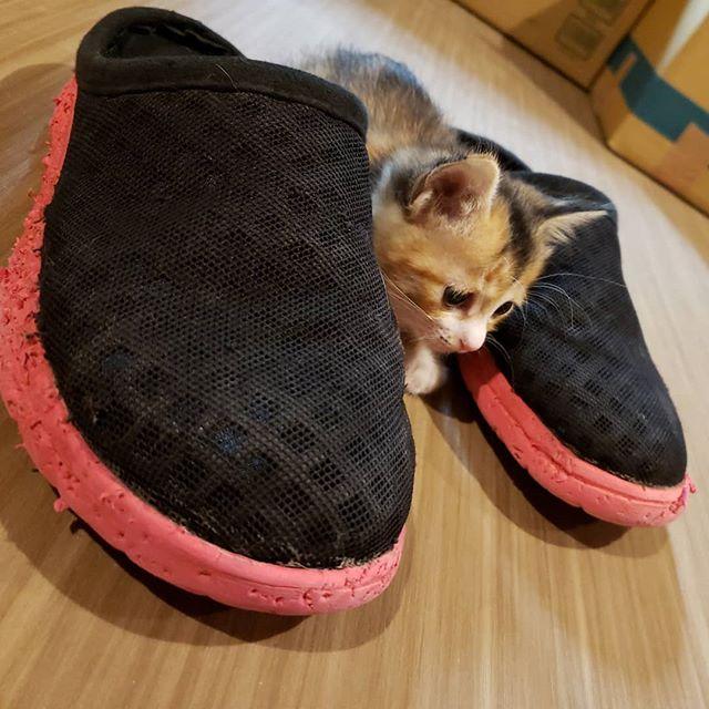 """・・・隠れてる""""つもり""""な『ユノ』ちゃんと歯型がいっぱいな""""くたびれた""""私のスリッパ。みんなの愛をかんじる。。かんじる?🤔 #猫 #ねこ #ネコ #cats #高齢猫 #保護猫 #保護猫施設 #猫シェルター #animal3rdeyes #アニマルサードアイズ #安らぎある #終の棲み処 を #目指して #いつもありがとう"""