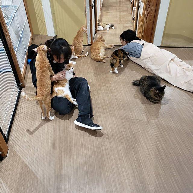 ・・・こき使われて疲れきった人達をなぐさめ癒す猫達。優しい(*꒪⌓꒪) #猫 #ねこ #ネコ #cats #高齢猫 #保護猫 #保護猫施設 #猫シェルター #animal3rdeyes #アニマルサードアイズ #安らぎある #終の棲み処 を #目指して #いつもありがとう