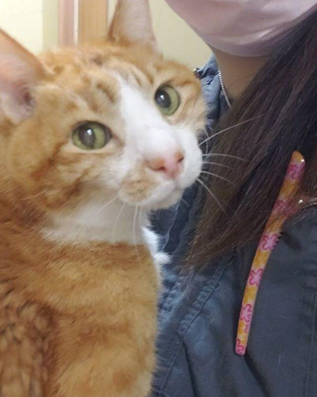 ・・・バタバタ続きでひきこもっておりますが....... 『ガブ』おじいさんからの甘いエキスをもらいつつなんとか生きております(笑)報告したいこともいっぱいあるのよーーーーー!みんな待っててねーーーーーそしてそして、引きこもっている最中もご支援くださるみなさま!本当にありがとうございます #猫 #ねこ #ネコ #cats #高齢猫 #保護猫 #保護猫施設 #猫シェルター #animal3rdeyes #アニマルサードアイズ #安らぎある #終の棲み処 を #目指して #いつもありがとう