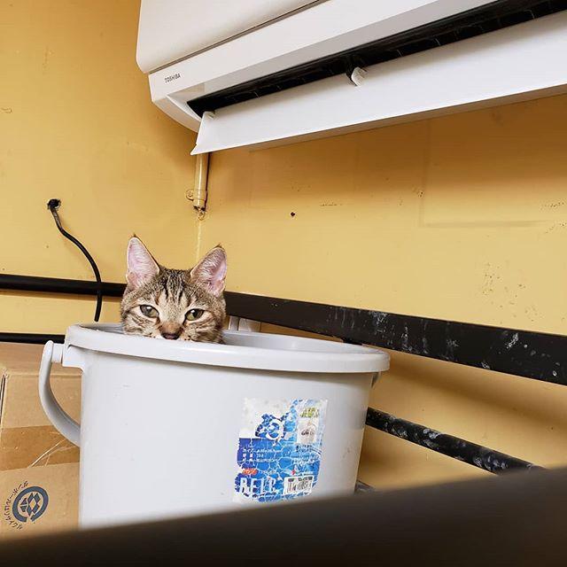 """・・・暖房つけたら温まりに駆け付けた『ひのき』嬢。ねぇ、、、それ、、バケツ(*꒪⌓꒪)ベッドちゃう、、、 お腹抱えて笑った深夜。こんな事もあるから心救われてる毎日です。さて準備に取り掛かろう。今まで泣き続けてきた""""あの子達""""がどうかどうか暗闇から解放されますように。#猫 #ねこ #ネコ #cats #高齢猫 #保護猫 #保護猫施設 #猫シェルター #animal3rdeyes #アニマルサードアイズ #安らぎある #終の棲み処 を #目指して #いつもありがとう"""