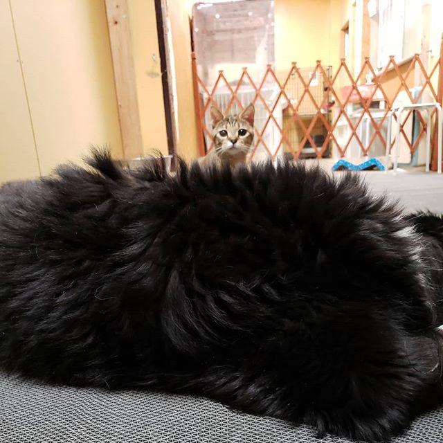 ・・・ 『アニ子』でかくれぼしてる『ひのき』嬢お顔がピョコピョコ出る度に悶絶中。 (*´Д`≡´Д`*) #猫 #ねこ #ネコ #cats #高齢猫 #保護猫 #保護猫施設 #猫シェルター #animal3rdeyes #アニマルサードアイズ #安らぎある #終の棲み処 を #目指して #いつもありがとう