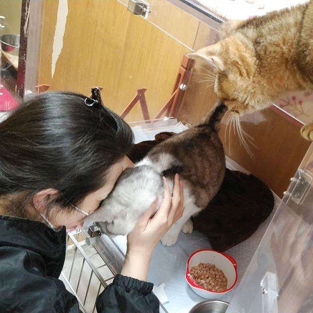 """・・・胸水のため酸素室で過ごす『八生』に『ひのき』嬢と一緒に""""念""""を送る図🤣早くよくなぁれ。#猫 #ねこ #ネコ #cats #高齢猫 #保護猫 #保護猫施設 #猫シェルター #animal3rdeyes #アニマルサードアイズ #安らぎある #終の棲み処 を #目指して #いつもありがとう"""