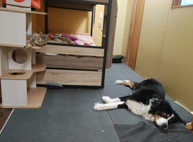 ・・・まったりシンクロ。 『ひのき』嬢&『アニ子』#猫 #ねこ #ネコ #cats #高齢猫 #保護猫 #保護猫施設 #猫シェルター #animal3rdeyes #アニマルサードアイズ #安らぎある #終の棲み処 を #目指して #いつもありがとう #たまに犬 #高齢犬