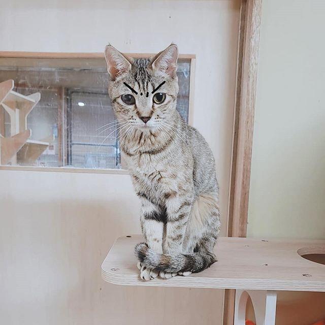 ・・・【お知らせ】本日 2/15(土)は、都合によりシェルター公開&SHOP 共に『臨時休業』とさせていただきます。楽しみにしてくださっていた方ごめんなさい明日からはまた通常OPEN予定です。たくさんのみなさまとお会い出来ますことを楽しみにお待ちしております#猫 #ねこ #ネコ #cats #高齢猫 #保護猫 #保護猫施設 #猫シェルター #animal3rdeyes #アニマルサードアイズ #安らぎある #終の棲み処 を #目指して #いつもありがとう