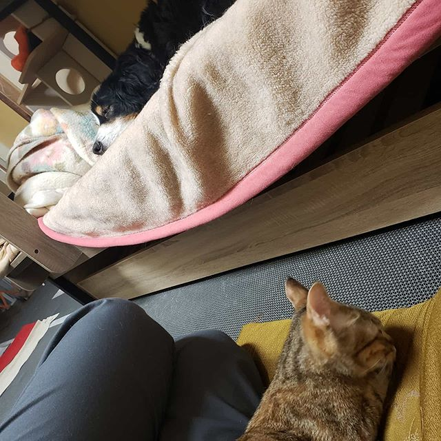 """・・・昨晩からワンコ『アニ子』が再び体調不良....... 介助が必須なので、『ひのき』嬢と一緒に付き添い寝。床で寝る""""飼い主""""とベッドで眠る姫。。。 明らかな主従関係((´∀`*))ヶラヶラ#猫 #ねこ #ネコ #cats #高齢猫 #保護猫 #保護猫施設 #猫シェルター #animal3rdeyes #アニマルサードアイズ #安らぎある #終の棲み処 を #目指して #いつもありがとう"""