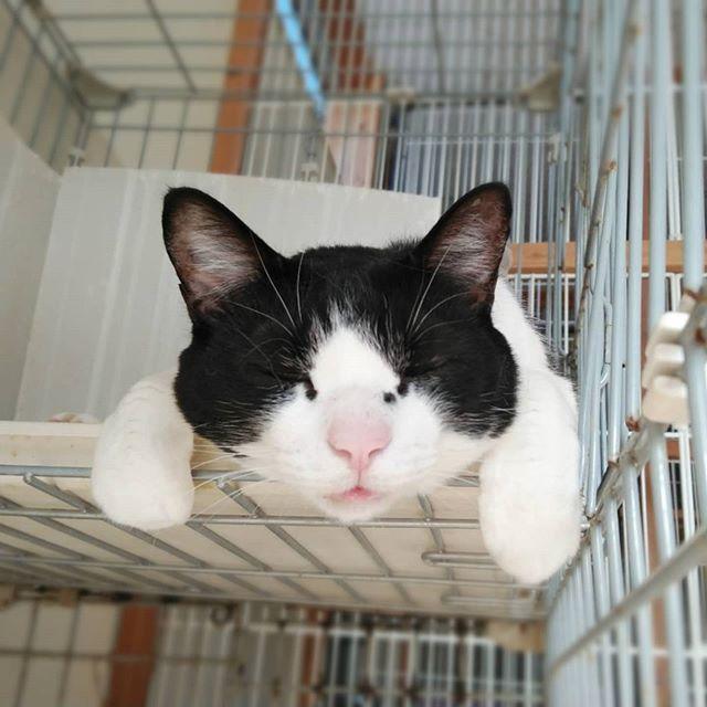 ・・・今日は雨退屈だね『U字』くん。#猫#ねこ#ネコ#cats#高齢猫#保護猫#保護猫施設#猫シェルター#animal3rdeyes#アニマルサードアイズ#安らぎある#終の棲み処 を#目指して#いつもありがとう