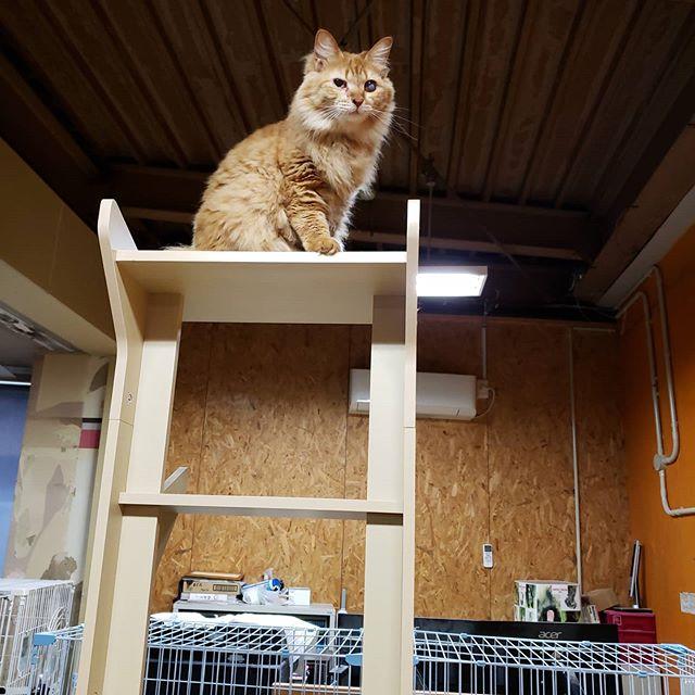 ・・・うちの司令塔『とな』ちゃん。おサボりは許しませんよーーーーー!!って聞こえてきそう(*꒪⌓꒪) 朝の5時です。やめて(´д`) #猫#ねこ#ネコ#cats#高齢猫#保護猫#保護猫施設#猫シェルター#animal3rdeyes#アニマルサードアイズ#安らぎある#終の棲み処 を#目指して#いつもありがとう#とな