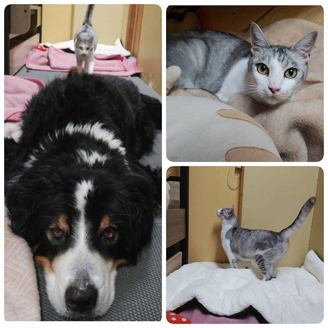 ・・・背後から.......迫り来る.......FIP(猫伝染性腹膜炎)治療をしていた『八生』まもなく経過観察期の3ヶ月を迎えます!おかげさまでとても元気に過ごしています応援してくださっているみなさま 、本当に本当にありがとう満期まであと少し!#ねこ#cat#猫#高齢猫#シニア猫#老猫#保護猫#猫シェルター#保護猫施設#Animal3rdEyes#アニマルサードアイズ#catshelter#多頭#猫好きさん#猫部#安らぎ ある#終の棲み処 を#目指しています#いつもありがとう#FIP#猫伝染性腹膜炎#八生#17歳