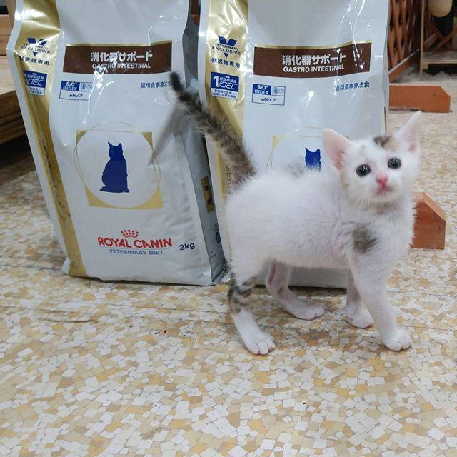 ・・・このごはんは、ぜんぶ ボクの もの!By『NIS(ニス)』それは『藤丸』のです。すくすく成長中#ねこ#cat#猫#高齢猫#シニア猫#老猫#保護猫#猫シェルター#保護猫施設#Animal3rdEyes#アニマルサードアイズ#catshelter#多頭#猫好きさん#猫部#安らぎ ある#終の棲み処 を#目指しています#いつもありがとう#NSSAN#猫バンバン#NIS(ニス)