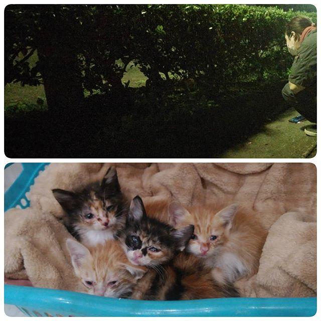 ・・・夜な夜な植木と話をする人の図.......ではありません。無事確保できてよかった.......これから雨も続くしね.......兄妹でよく頑張って堪えたね。もう大丈夫よ。#ねこ#cat#猫#高齢猫#シニア猫#老猫#保護猫#猫シェルター#保護猫施設#Animal3rdEyes#アニマルサードアイズ#catshelter#多頭#猫好きさん#猫部#安らぎ ある#終の棲み処 を#目指しています#いつもありがとう#子猫#生後1.5ヶ月